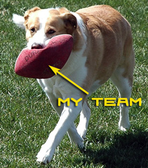 dogfootball.jpg