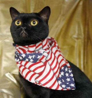 barack-cat.jpg