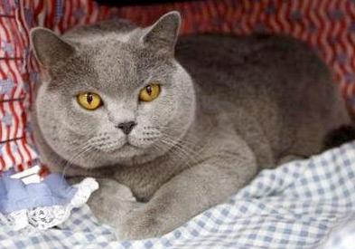 mccain-cat-2.jpg