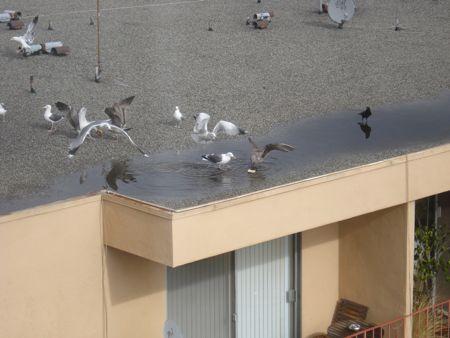 bagel-birds-1.jpg