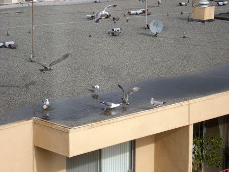 bagel-birds-2.jpg