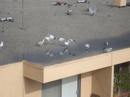 bagel-birds-4.jpg