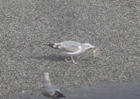 bagel-birds-7.jpg