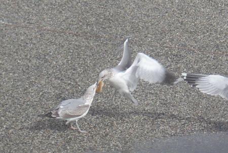 bagel-birds-8.jpg