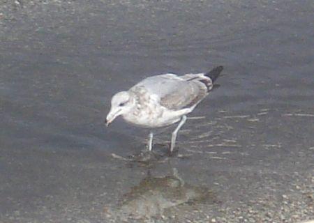 gabe-bird-1.jpg