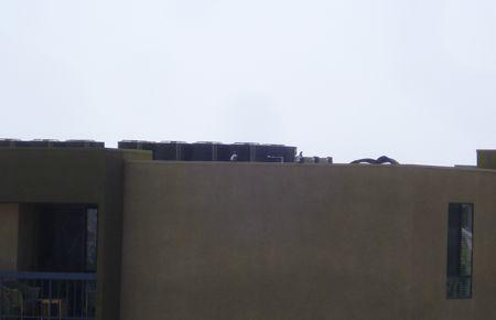 pigeons-6.jpg