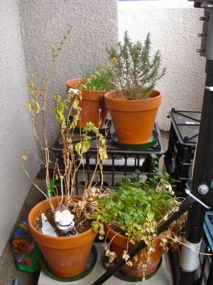 herb-garden-01.jpg