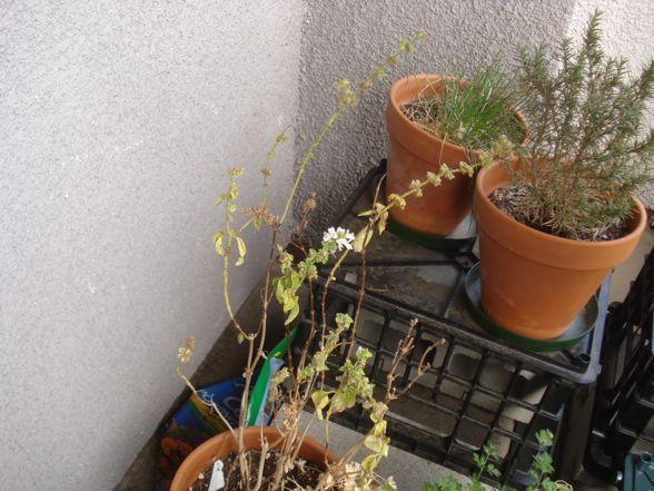 herb-garden-02.jpg