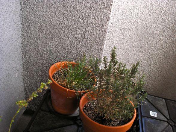 herb-garden-03.jpg
