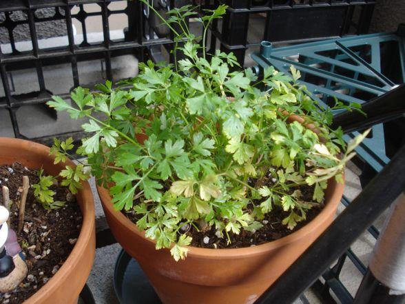 herb-garden-06.jpg