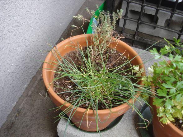herb-garden-08.jpg