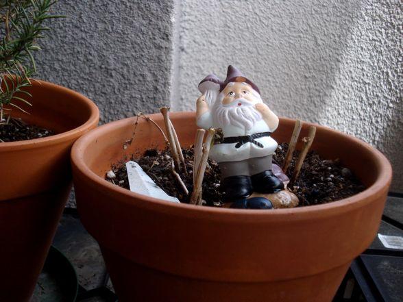 herb-garden-10.jpg