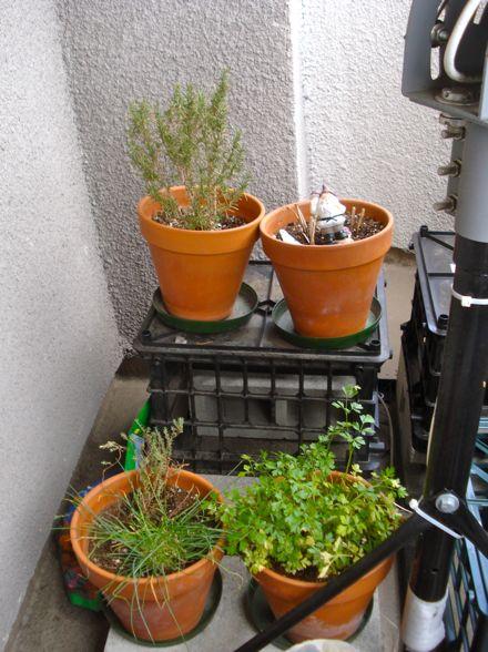 herb-garden-12.jpg