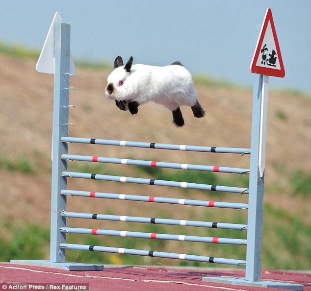 bunny-dressage.jpg